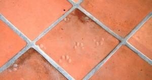 Limpiar suelos de barro